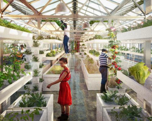 Exkursion: Urbane Landwirtschaft